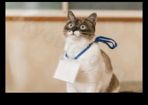 セミナー受ける猫
